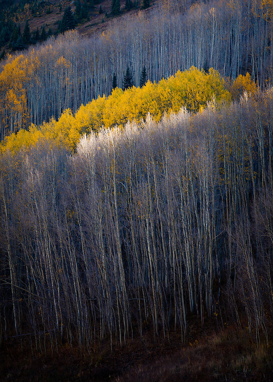 A touch of light and the colors of autumn near Crested Butte, Colorado.