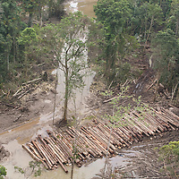 Area known as '16km', in The rainforests of the 'Turama extension' logging concession,  near Paia, Gulf Province, Papua New Guinea, Wednesday 3rd September 2008. Twenty percent of global greenhouse emissions annually are caused by the deforestation of natural forests worldwide.