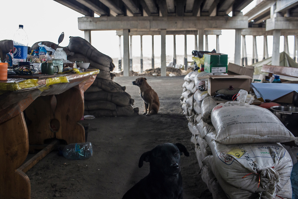 PERVOMAISKE, UKRAINE - NOVEMBER 18, 2014: Stray dogs that are fed by members of the 5th platoon of the Dnipro-1 brigade, a pro-Ukraine militia, at their post underneath a bridge in Pervomaiske, Ukraine. Since the eruption of fighting in Eastern Ukraine, a large number of pets have been abandoned as residents fled. CREDIT: Brendan Hoffman for The New York Times