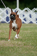 Hickories Circuit Dog Show 2014