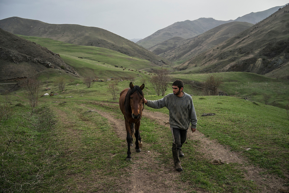 VANK, NAGORNO-KARABAKH - APRIL 22: Gevorg Akulyan, 24, leads a Karabakh horse, a breed originally developed in the region which is now faced with extinction, back from being out at pasture on a farm in the mountains on April 22, 2015 near Vank, Nagorno-Karabakh. Since signing a ceasefire in a war with Azerbaijan in 1994, Nagorno-Karabakh, officially part of Azerbaijan, has functioned as a self-declared independent republic and de facto part of Armenia, with hostilities along the line of contact between Nagorno-Karabakh and Azerbaijan occasionally flaring up and causing casualties. (Photo by Brendan Hoffman/Getty Images) *** Local Caption *** Gevorg Akulyan
