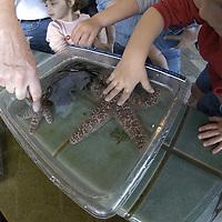 Grandfather and grandson touching a seastar ( tide pool touch )&amp;#xA;Monterey Bay Aquarium&amp;#xA;&copy; KIKE CALVO - V&amp;W<br />