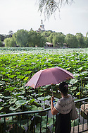 A lady with an umbrella looks at the White Pagoda in Behai Park in Beijing.