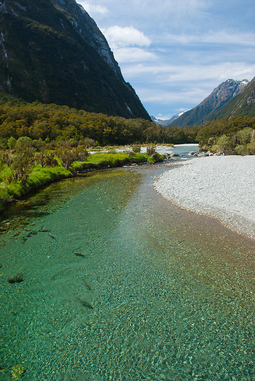 Trout basking in clear waters of the Clinton River, Milford Track, Fiordland, New Zealand