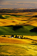 Image of wheatfields in the Palouse, eastern Washington, Pacific Northwest