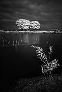 Vietnam Images-Fine art-Tree-Mekong delta