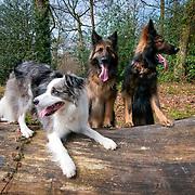 Roxy, Menna and Mally