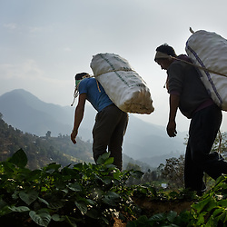 Heavy sacks of potatoes from Durga&rsquo;s farm are taken down the hill to be sold. Most members of the community work on an exchange labor basis. When one family needs help harvesting, family and neighbors come to help with the workload in exchange for food and beverages. It is expected that they will do the same for each of these community members when the time is needed. <br />