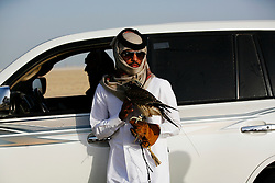 "The owner of an al-Hurr [""free"" or ""wild""], species of falcon prepares to release the bird to chase a pigeon. In English, the bird is known as a ""Saker"", which is the Arabic word for ""falcon""."