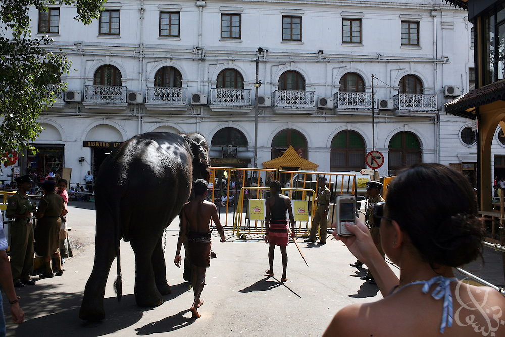 An elephant trainer moves an elephant in  preparation for the Kandy Perahera in Kandy, Sri Lanka August 12, 2008. The temple, which houses what is purported to be the tooth of Buddha, is a place of pilgrimage for Sri Lankan Buddhists and is considered by many to be the treasury of the island's entire culture.