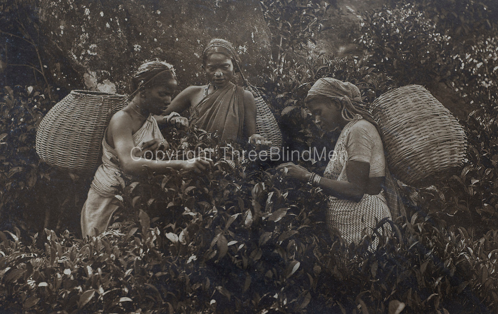 H. W. Cave. Travels in Ceylon.<br />