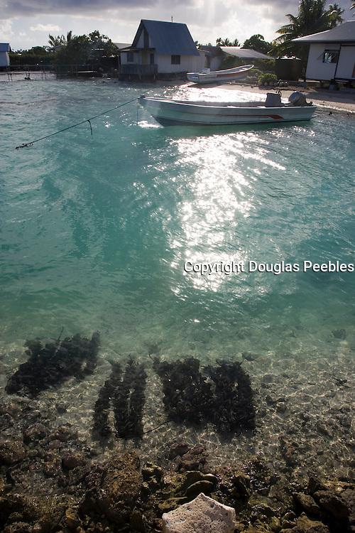 Oysters in water, Black pearl farm, Takaroa, Tuamotu Islands, French Polynesia<br />