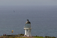 NEW ZEALAND, Cape Reinga. 10th March 2012. Volvo Ocean Race Leg 4. Team Telefonica.