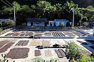 Drying coffee south of La Farola Highway, Guantanamo, Cuba.