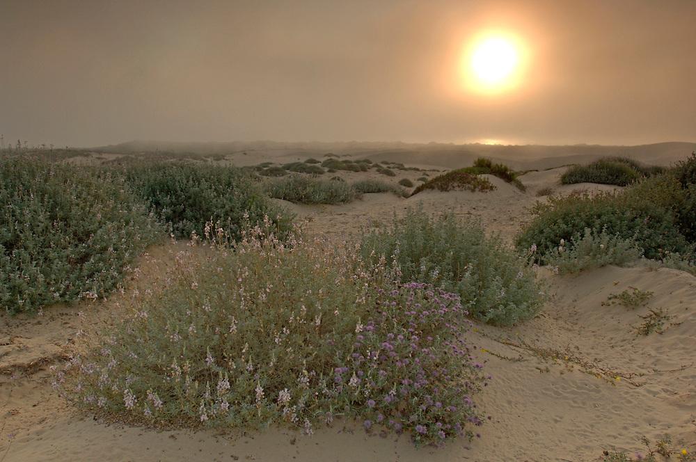 Sunset at Oceano Dunes S.V.R.A., Oceano, California, United States of America