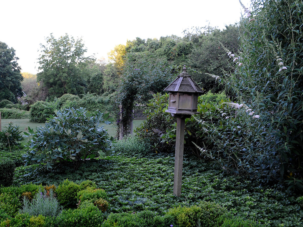 BUDDLEIA DAVIDII 'NANHO ALBA', WHITE BUTTERFLY BUSH AND BIRDHOUSE AT DAWN