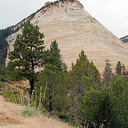 A view of the Checkerboard Mesa lookout in Zion National Park Utah.