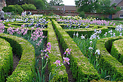 The Iris Garden at Doddington Hall, Lincolnshire, during 'Iris Week'. The formal, geometric beds feature concentric curved hedges of clipped box (Buxus sempervirens). They are planted with varieties of Iris germanica.<br />
