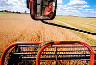 In a wheat field on a farm outside Hamilton, Randy Proud runs the combine that cuts and threshes the wheat.<br />