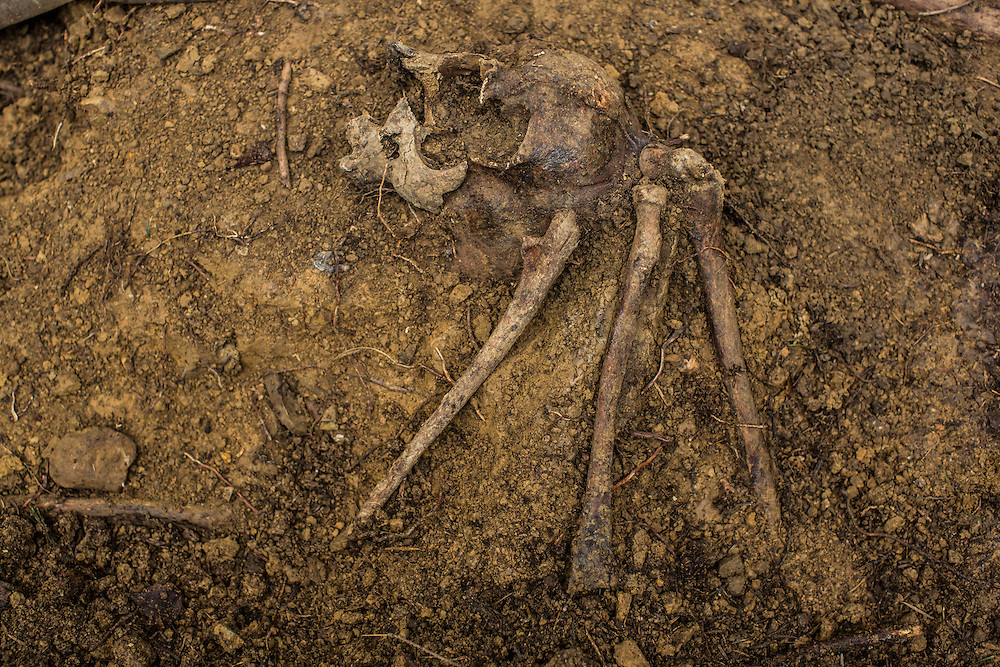SKOLE, UKRAINE - MAY 1, 2015: Bones believed to belong to Ukrainian partisans remain partially buried in a World War II-era mass grave after being unearthed by the organization Dolya in Skole, Ukraine. Dolya was formed to excavate and repatriate remains from World War II, though its focus is often on locating the graves of Ukrainian partisans killed by Soviet forces. CREDIT: Brendan Hoffman for The New York Times