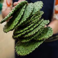 Nopales (cactus) before trimming/cleaning at Mercado Medellin. Nopales are very popular in quesadillas.