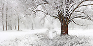 A nice snowfall at Stupinigi Parc, in the immediate outskirts of Turin, Italy. Stitched from six vertical frames.