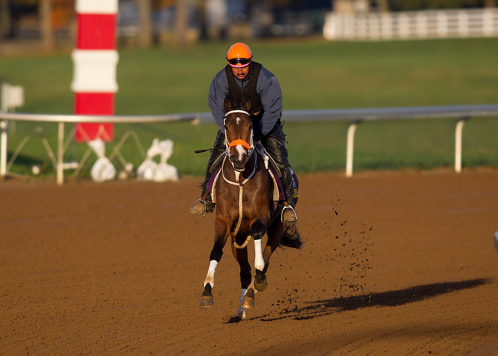 October 29, 2015:   Calamity Kate, trained by Kelly Breen and owned by George & Lori Hall, exercises in preparation for the Longines Breeders' Cup Distaff at Keeneland Race Track in Lexington, Kentucky. Alex Evers/ESW/CSM
