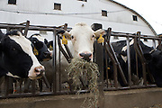 Nov 11, 2008; Perrysville, OH, USA; Ayers Farms, Ashland County. Photo by Bryan Rinnert/3Sight Photography