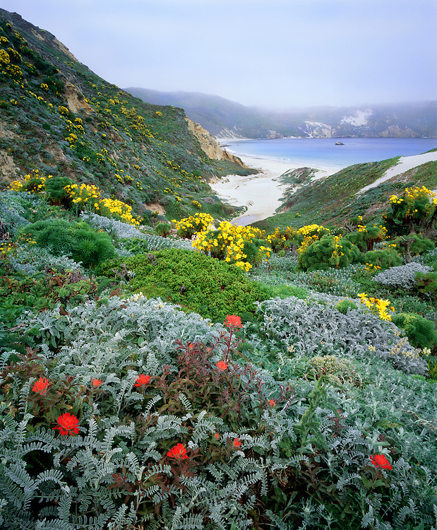 0603-6022  ~  Copyright:  George H. H. Huey  ~  Nidever Canyon with paintbrush and giant coreopsis and Cuyler Harbor with fog.  San Miguel Island.  Channel Islands National Park, California.