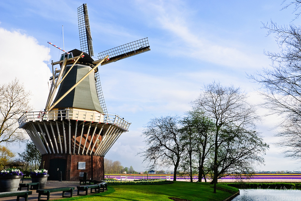 The Keukenhof Windmill at Keukenhof Spring Tulip Gardens, Lisse, The Netherlands.