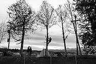 05 March 2016, Idomeni Greece - A man on the tree during the cut of wood.