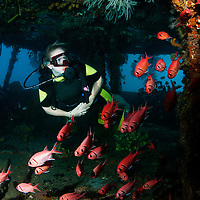 Diver inside the wreck of the Lesleen M freighter with cardinal fish in Anse Cochon Bay, St. Lucia.