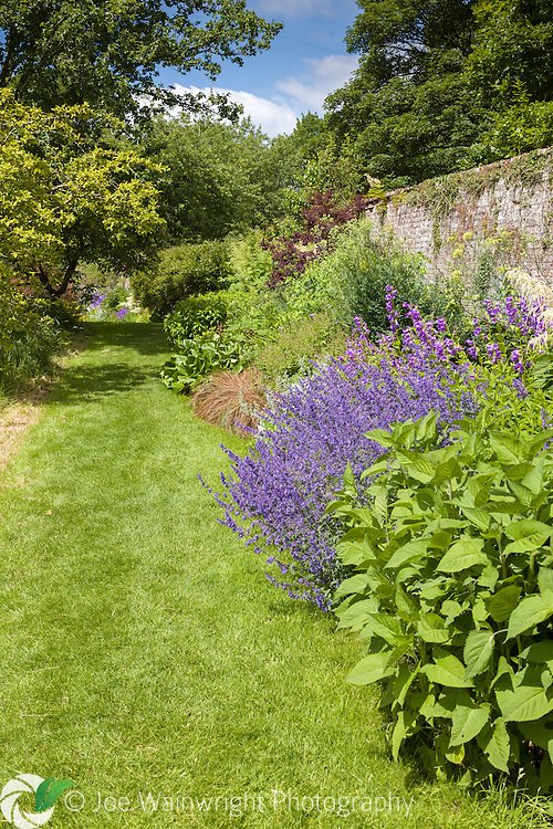 A herbaceous border in the gardens at Acorn Bank, Cumbria - photographed in June