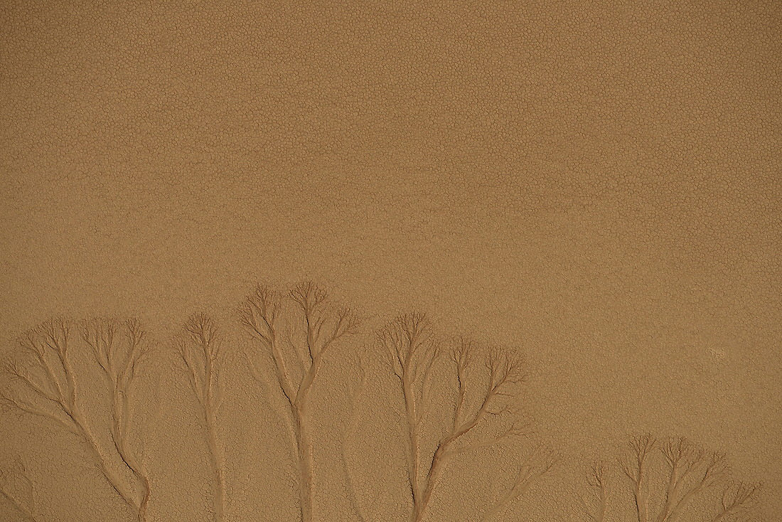 Resembling tree branches, dried up water runoff has left its scar on the Namib Desert in Namibia Africa on August 17, 2015. The desert gets less than .39 inches of rain annually. The dry climate of the Namib reflects the almost complete lack of bodies of water on the surface. Most rivers flow underground and are dry for most of the year, — © /Jeremy Lock