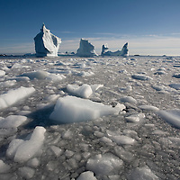 Greenland, Frederiksdal, Shattered ice floats near melting iceberg along southern coastline on summer evening