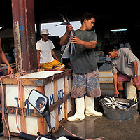 Philippines, Workers unload fish at Manila's Navotas Fishing Port Complex in early morning.