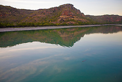 A small crocodile swims lazily down the Hunter River.