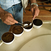 Coffee tasting at Finca Lerida Plantation and Hotel (Panama)caffeine, Coffea canephora, cultivated, flavor, chaoua, kahve, robusta, Rubiaceae, Coffea arabica, coffee cultivation, process, flavor, aroma, Commodity, fresh produce, Coffee futures contracts, industry, economy,