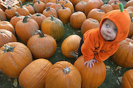 Jack Henderson, 1, makes a claim to his first pumpkin during the annual Parent/Teacher Association pumpkin sale at the Town Square in Jackson, Wyoming.