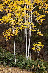 Fall color on the High Road to Taos.