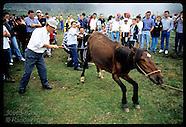 20: GALICIA WILD HORSE BRANDING, SHEARING