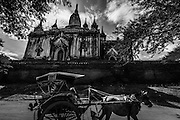 A horse cart passes in front of a temple in Bagan, Myanamr