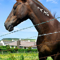 Europe, Ireland. Branded farm horse of Ireland.