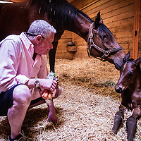 14-0520-Doctor Carina & Foal