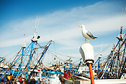Seagulls waiting for the waiting ships at the harbor