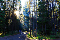 God rays through the trees at Waterfowl Lakes Campground<br /> <br /> &copy;2015, Sean Phillips<br /> http://www.RiverwoodPhotography.com