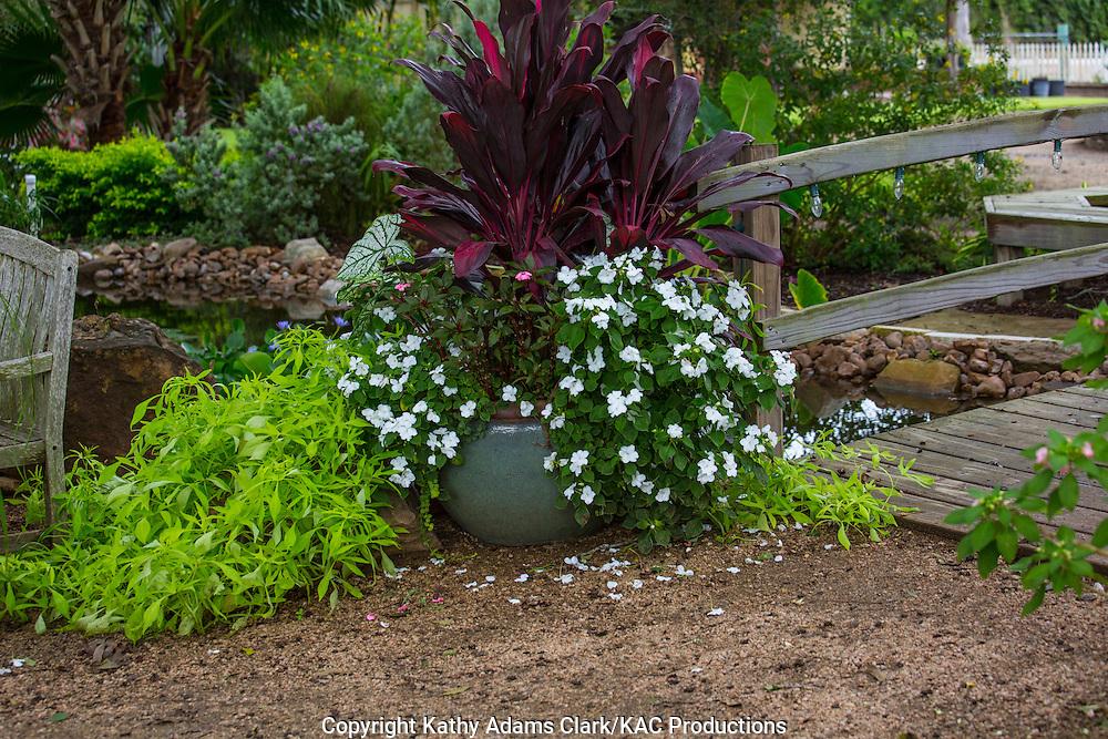 Container garden, Garden, impatients, croton, sweet potato, Houston, late summer, Texas.