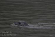 17: INSIDE PASSAGE SEALS & OTTERS