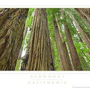 Posters / California