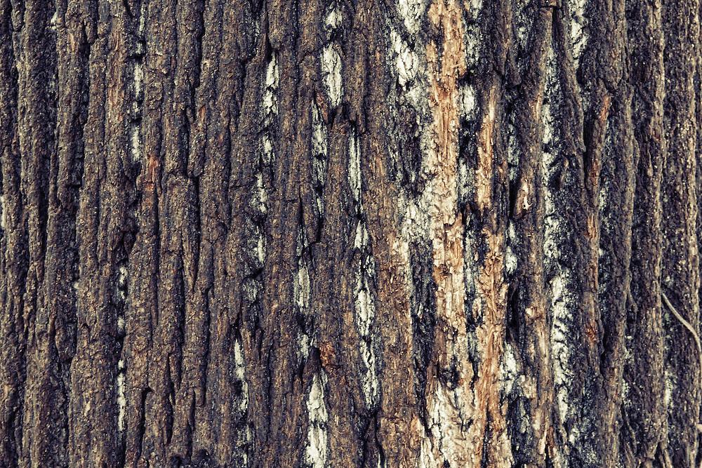 Frost on tree bark.